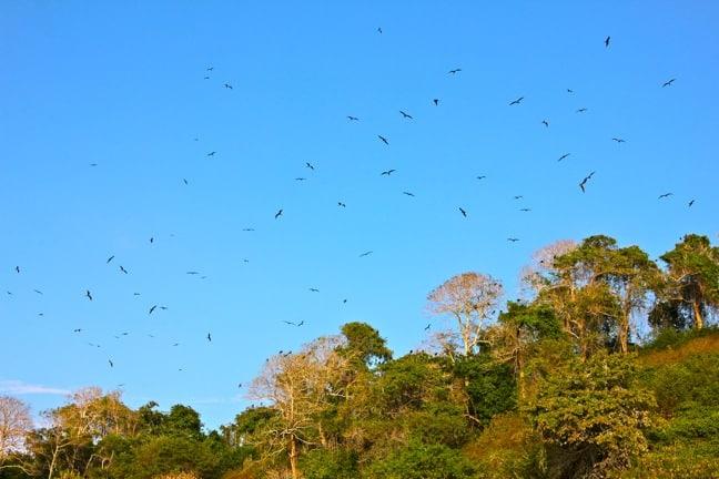 Bird Island at Islas Secas, Panama