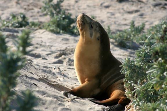 Meeting the Wildlife On Kangaroo Island, Australia