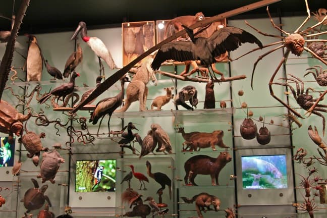 Hall_of_Biodiversity_Exhibit_America_Museum_of_Natural_History
