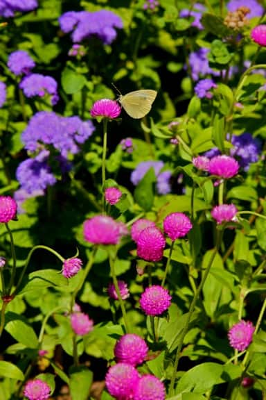 Butterfly_Flowers_Central_Park