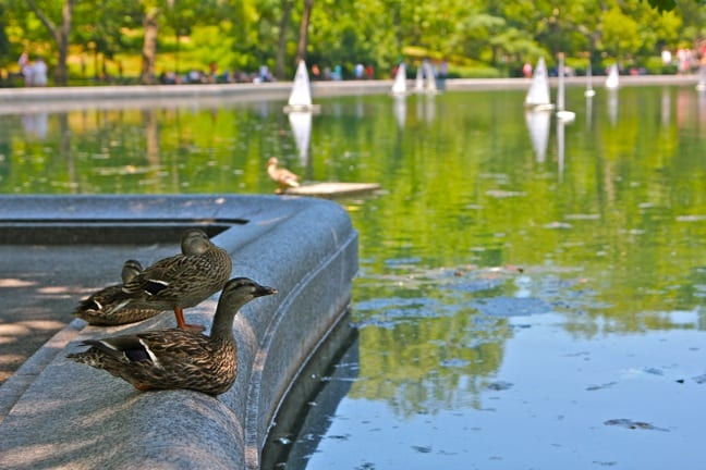 Remote control sailboats at Central Park Conservatory