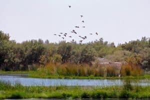 Ecotourism in Jordan: Azraq Wetland Reserve