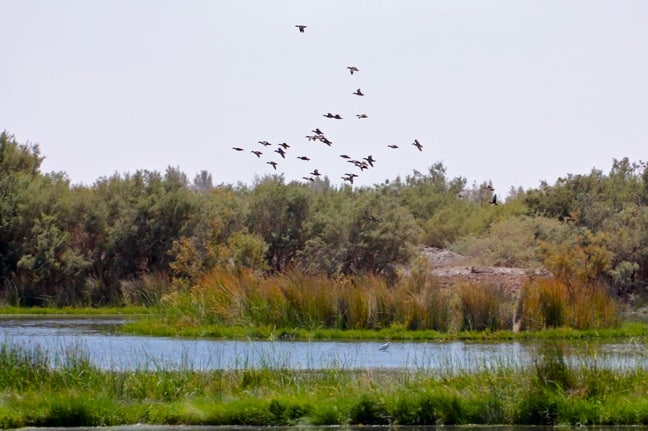 Birdwatching at Azraq Wetland Reserve, Jordan
