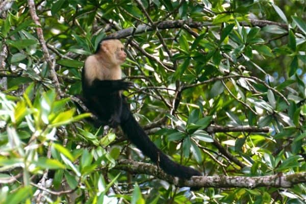 Corcovado National Park: A Journey Into Remote #EcoCostaRica