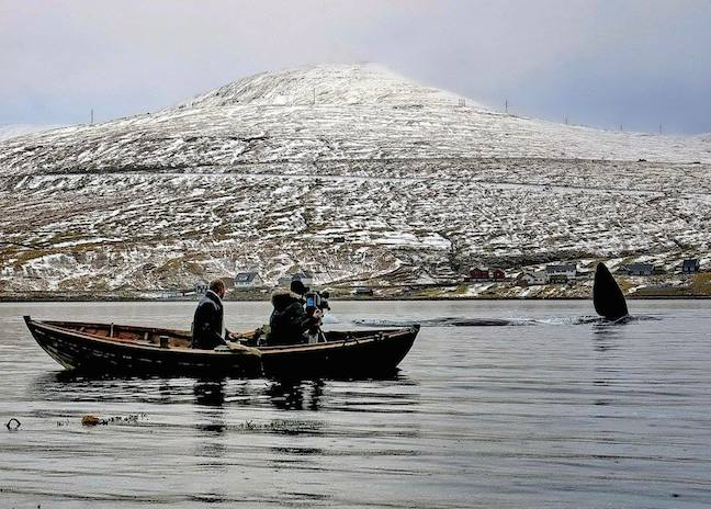 Faroe_islands_Whale_Watching