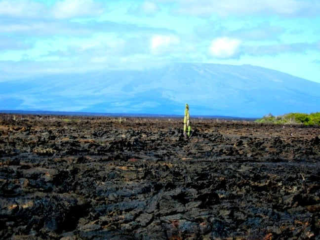 Isabela Island, Galapagos with Sierra Negra in background