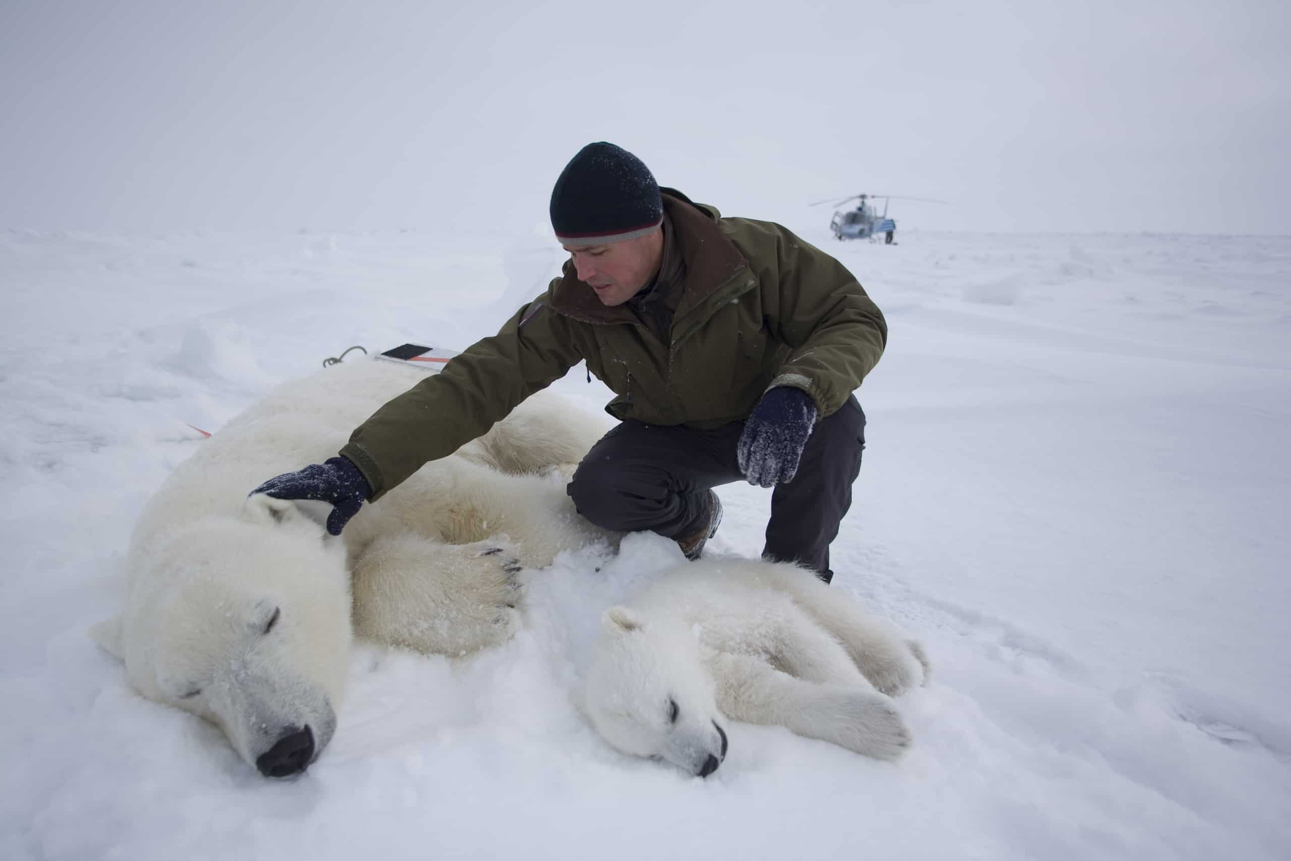Jeff Corwin with Polar Bears