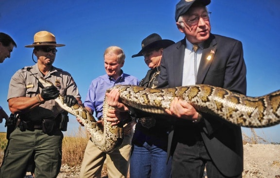 ECO NEWS: Fighting the Burmese Python In Everglades National Park
