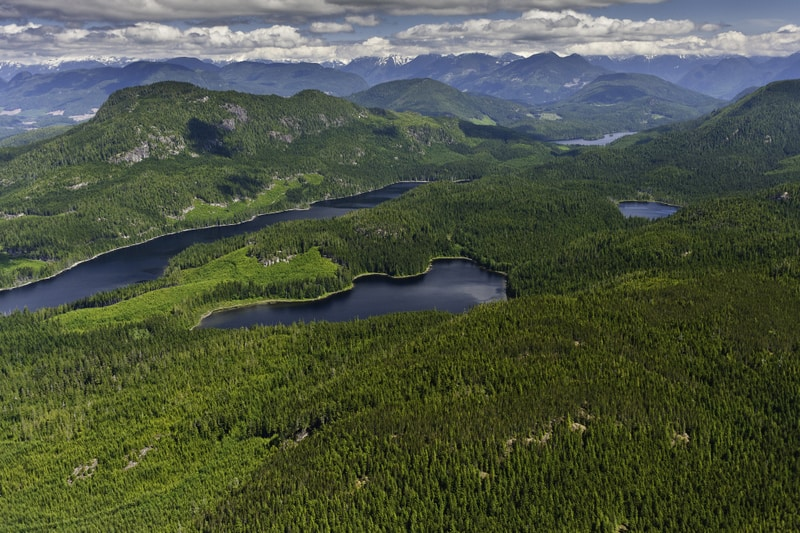 The Great Bear Rainforest in British Columbia