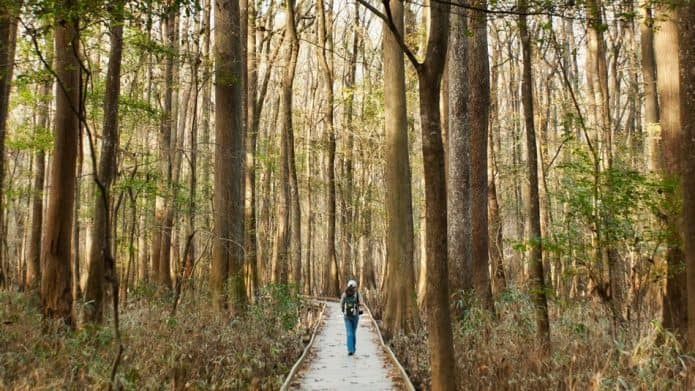 List of National Parks, A Complete Guide -Congaree National Park