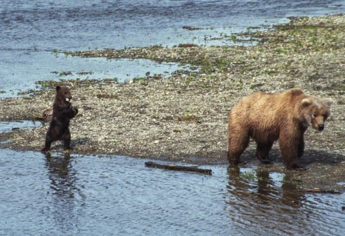 List of National Parks by State -Katmai National Park