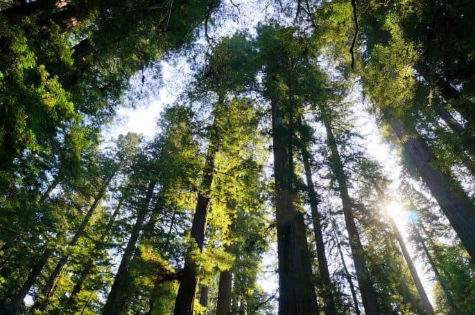 List of CA National Parks- Redwood National Park