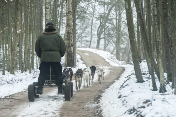 LITHUANIA: Responsible Dog Sledding in Neris Regional Park