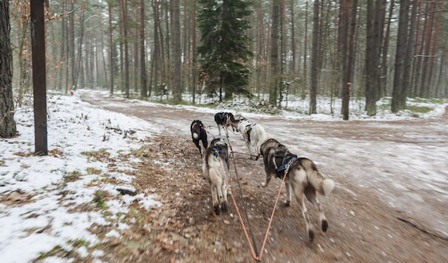 Lithuania-Dog-Sledding-First-Corner