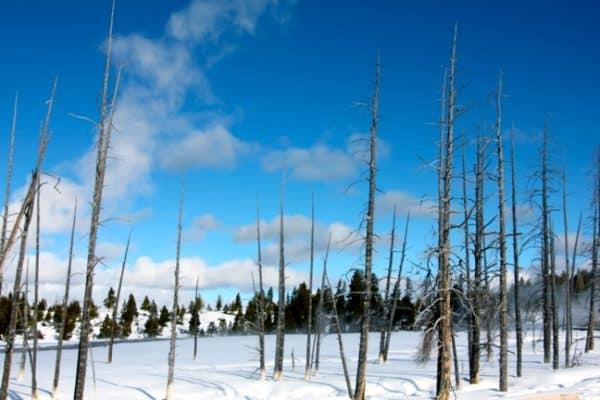 YELLOWSTONE NATIONAL PARK 5- Yellowstone Lower Geyser Basin Photos