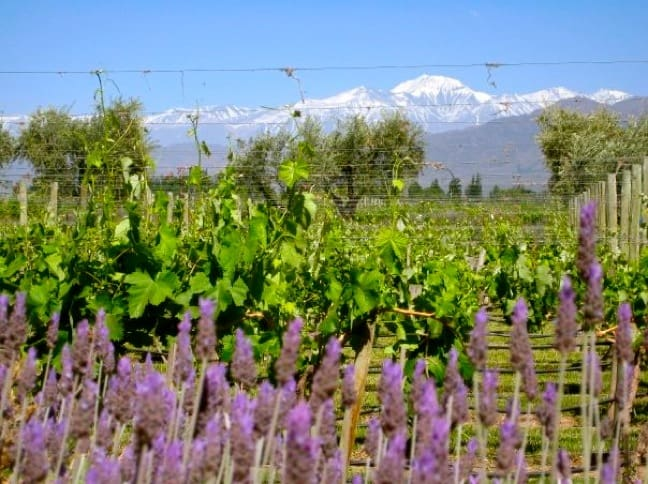 Eco Attractions -Vineyard in Mendoza, Argentina