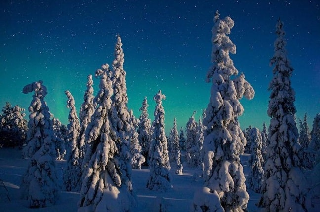 Moonlight on Spruce Trees, Oulanka National Park