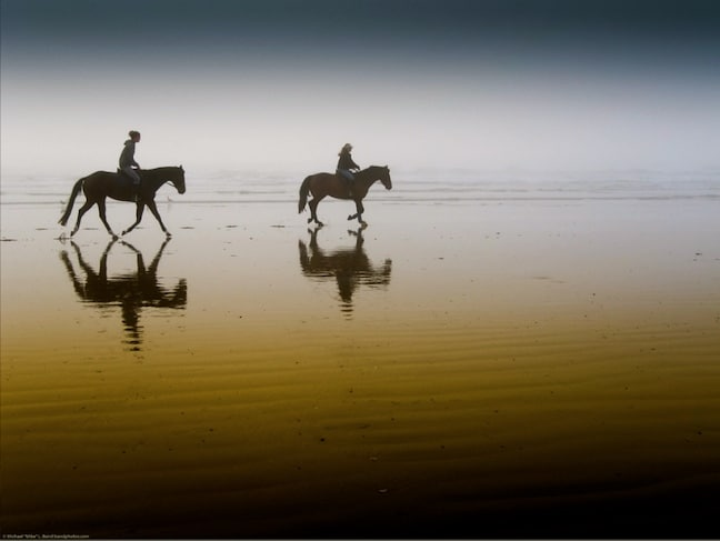 Responsible Horseback Riding Tours on Morro Strand State Beach