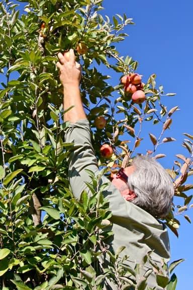 Autumn activities Atlanta Apple Picking Elijay
