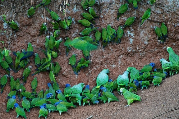 ECO NEWS: Ecuador's Yasuni National Park: Bold Eco-Initiative or Environmental Blackmail?
