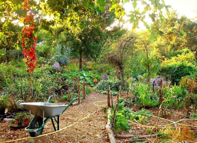 Permaculture Garden Guide