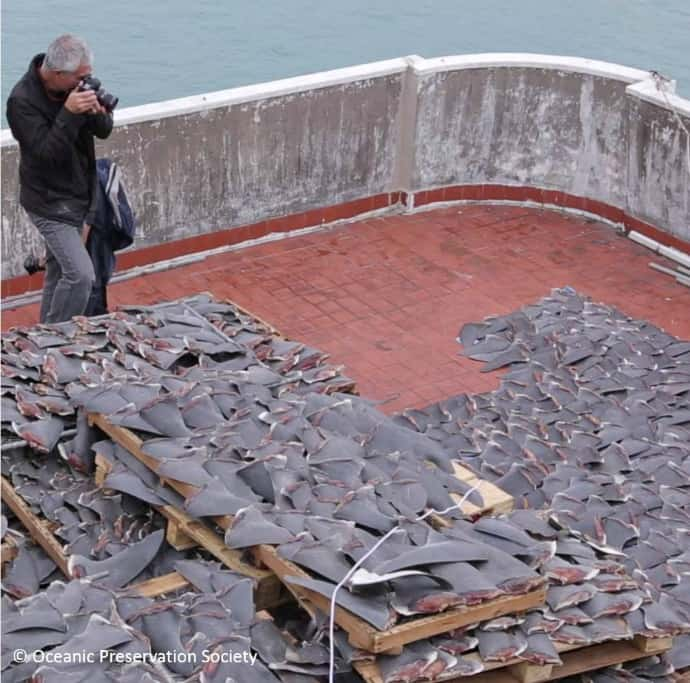Louie Psihoyos Photographing Shark Fins in Racing Extinction