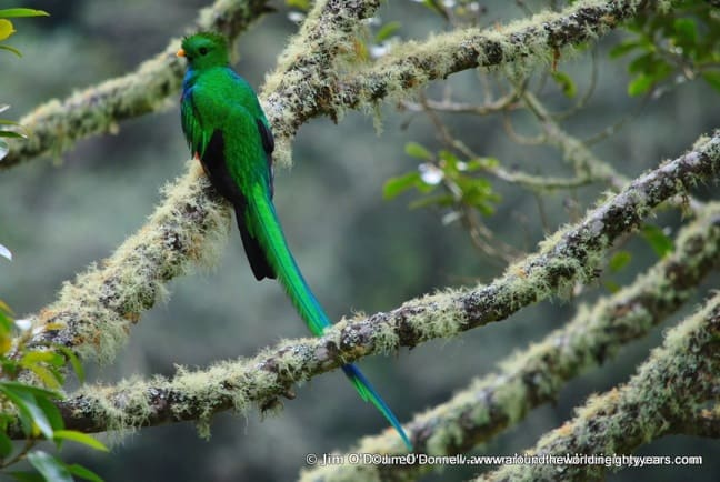 Bird watching Costa Rica -Resplendent Quetzal Near Rio Savegre