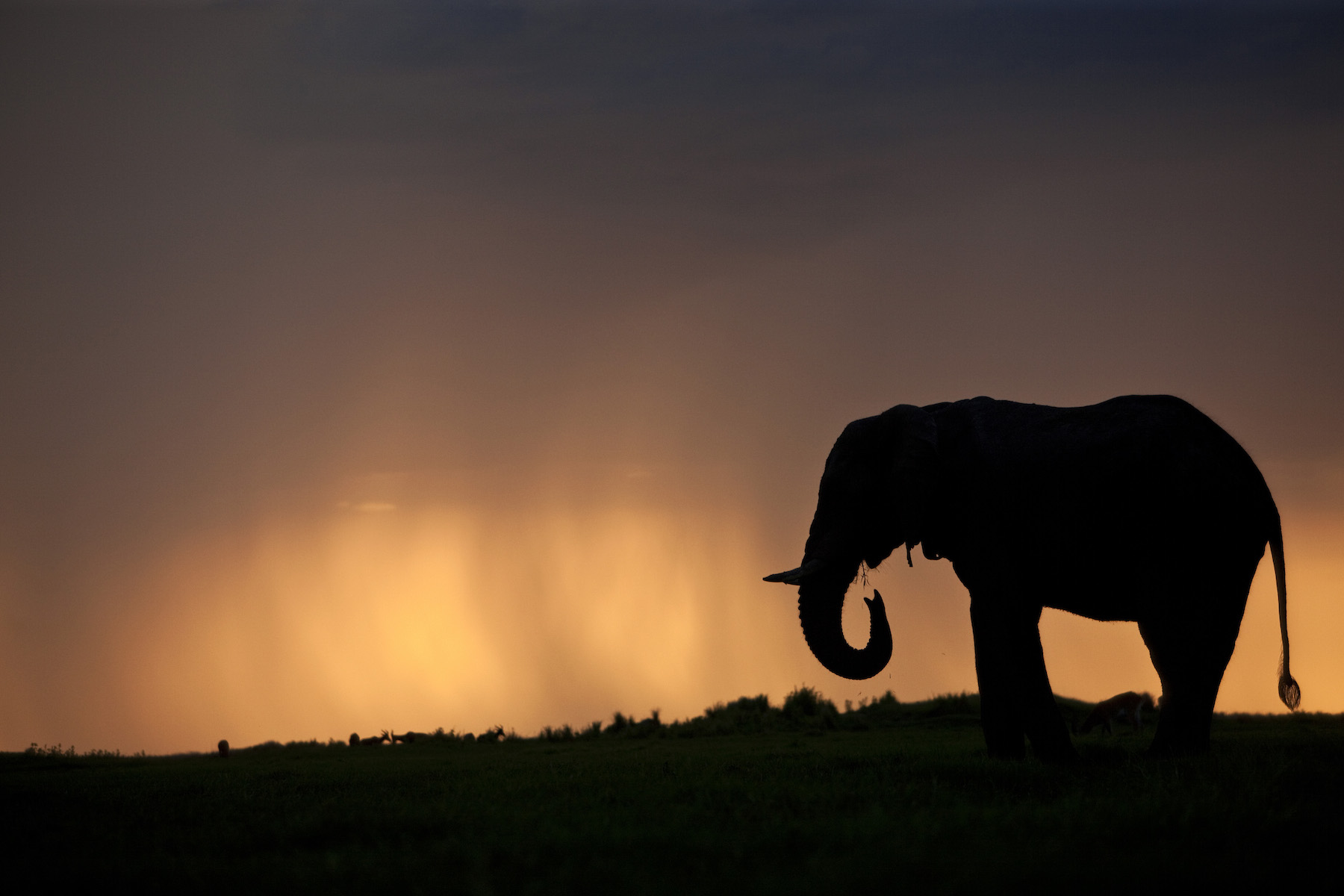 Nature: Soul of the Elephant, from filmmakers Dereck and Beverly Joubert
