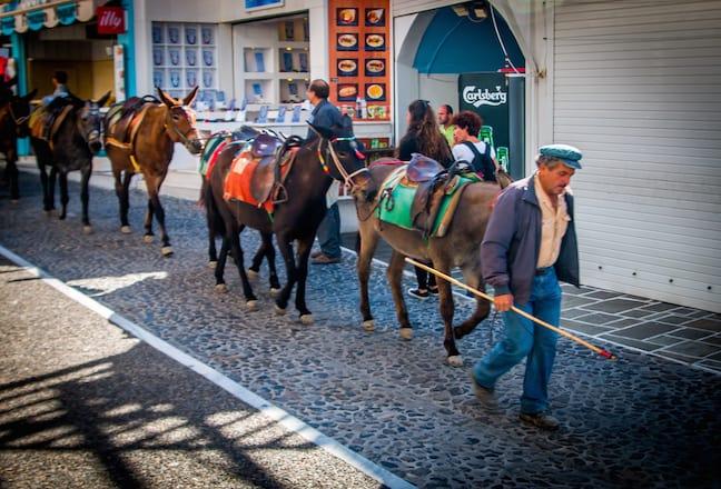 Shepherd Leads Donkeys to Begin Their Workday in Fira, Santorini