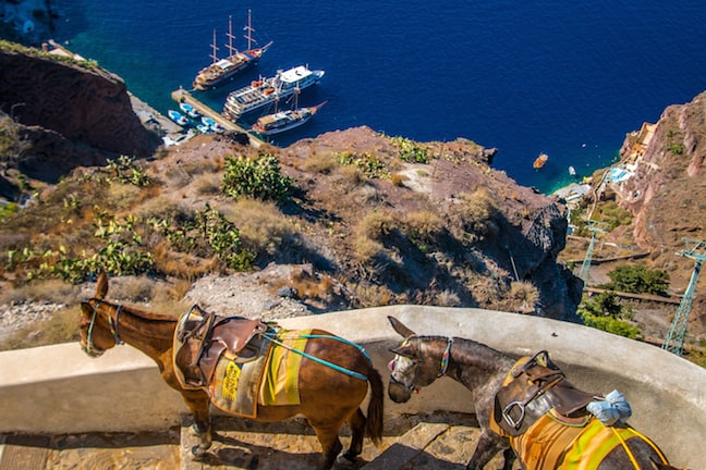 Donkeys Begin Their Workday in Fira, Santorini