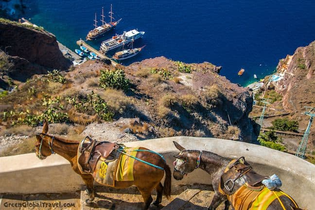 Donkeys in Fira, Santorini