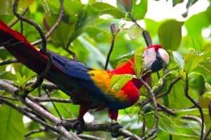 Ecotourism in Costa Rica -Corcovado National Park, Costa Rica