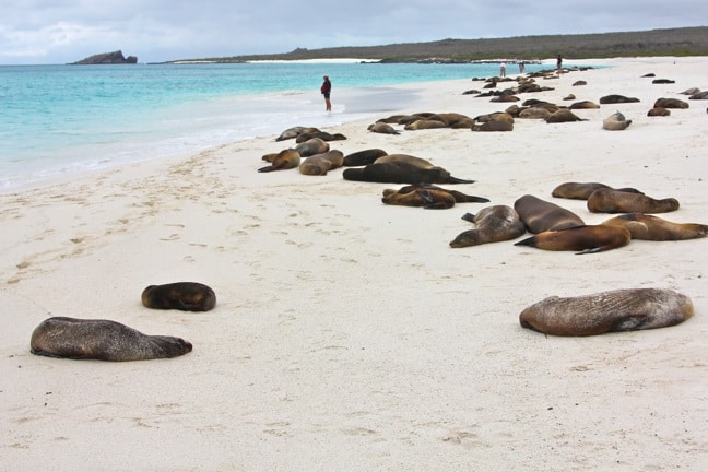 Galapagos Islands Sea Lion Colony in Gardner Bay, Espanola Island
