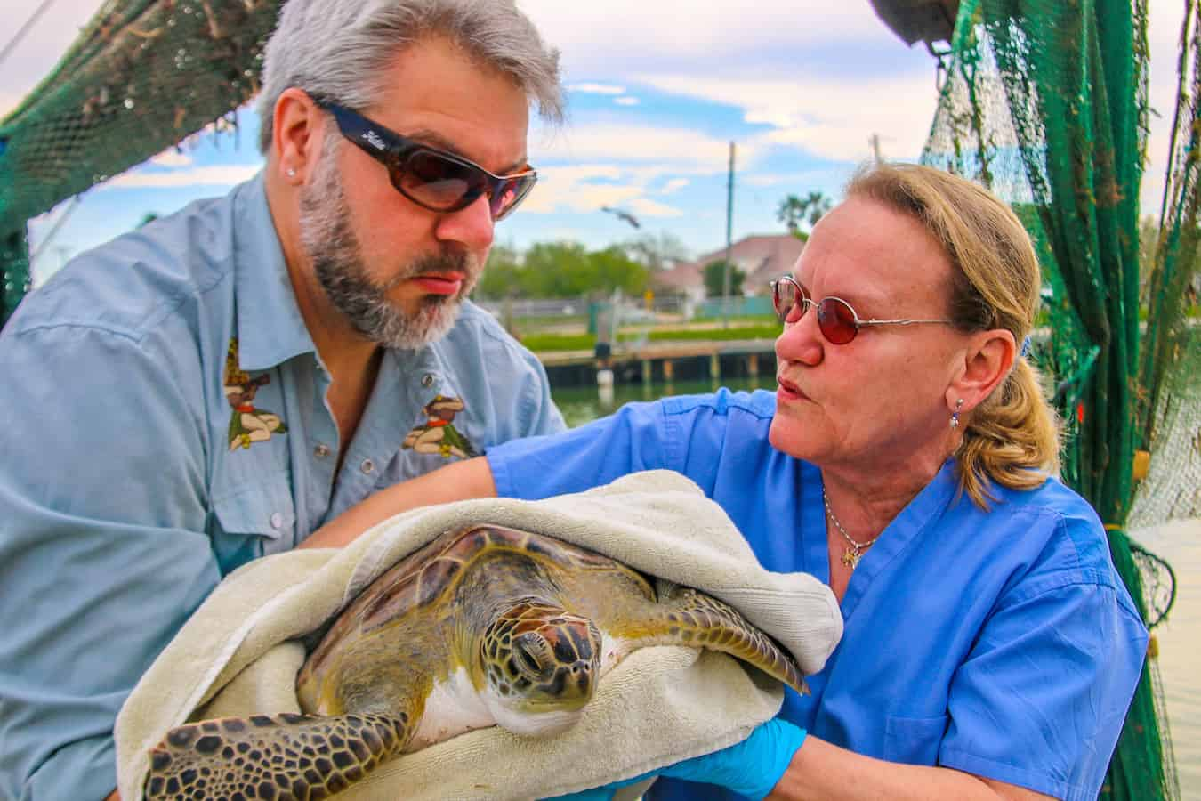 Rescuing a Green Sea Turtle with Sea Turtle Inc.