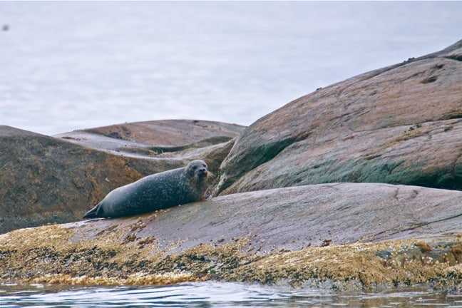 Seal Colony in Kosterhavet National Park, Sweden