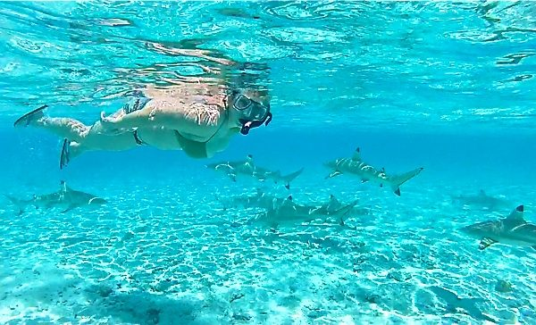 Snorkeling with sharks in Bora Bora, Tahiti
