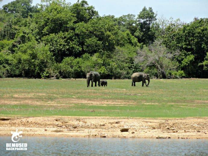 Sri Lanka Wildlife: Elephant Family