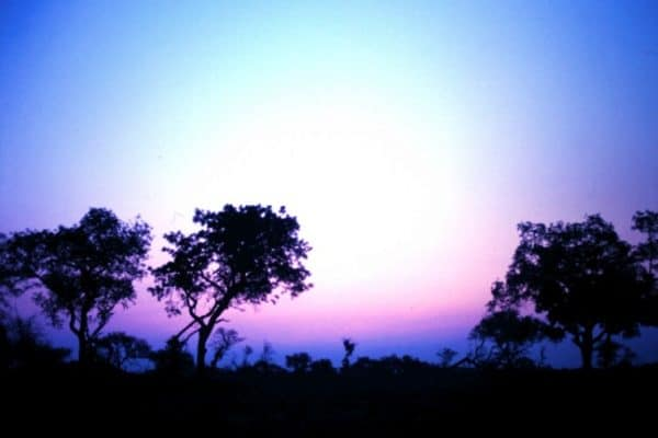PIC OF THE DAY: Sunset In Kruger National Park, South Africa