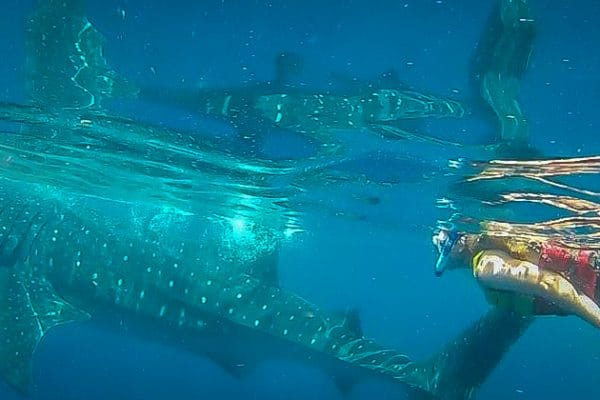 MEXICO: Swimming with Whale Sharks in Cancun (With Video)
