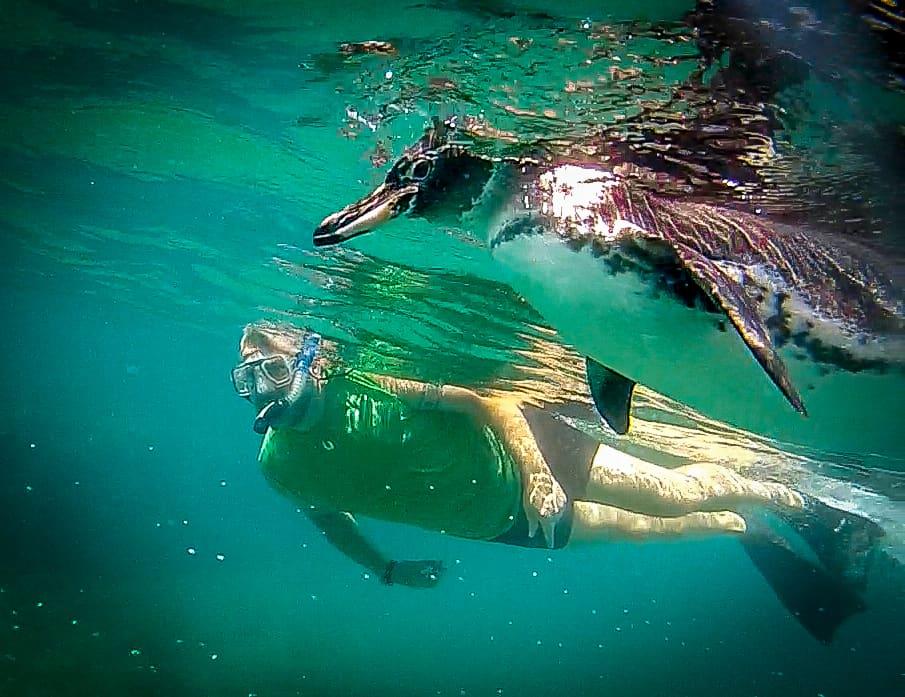 Schwimmen Mit Pinguine