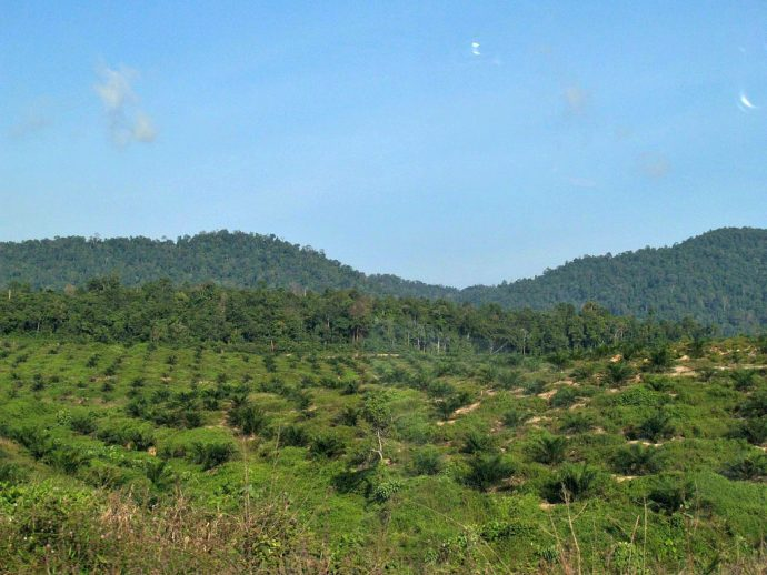 Taman Negara -Palm Oil is Not Reforestation
