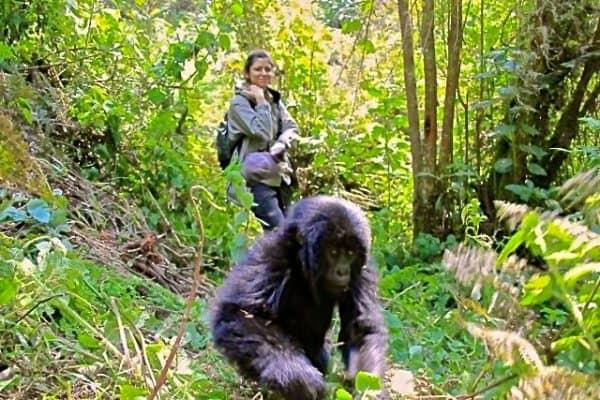 Dian Fossey Gorilla Fund President/CEO Tara Stoinski with Baby Gorilla in Rwanda