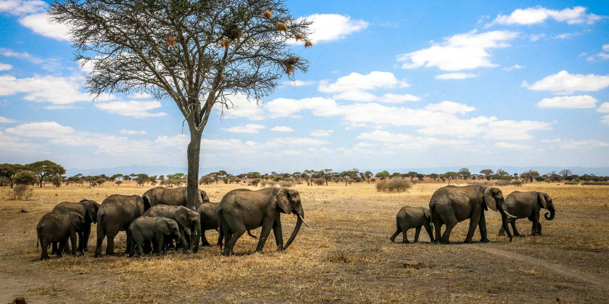 National Parks in Tanzania