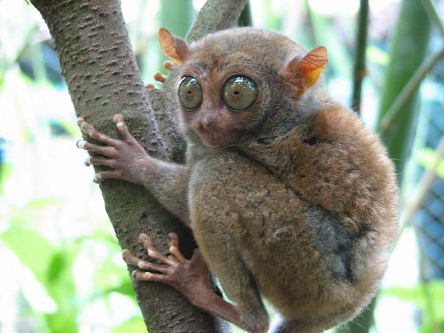 Image of: Cute Weird Animals Tarsier Green Global Travel 60 Weird Animals From All Around The World