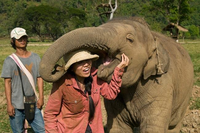 Saving Endangered Asian Animals: The 10 Best Wildlife