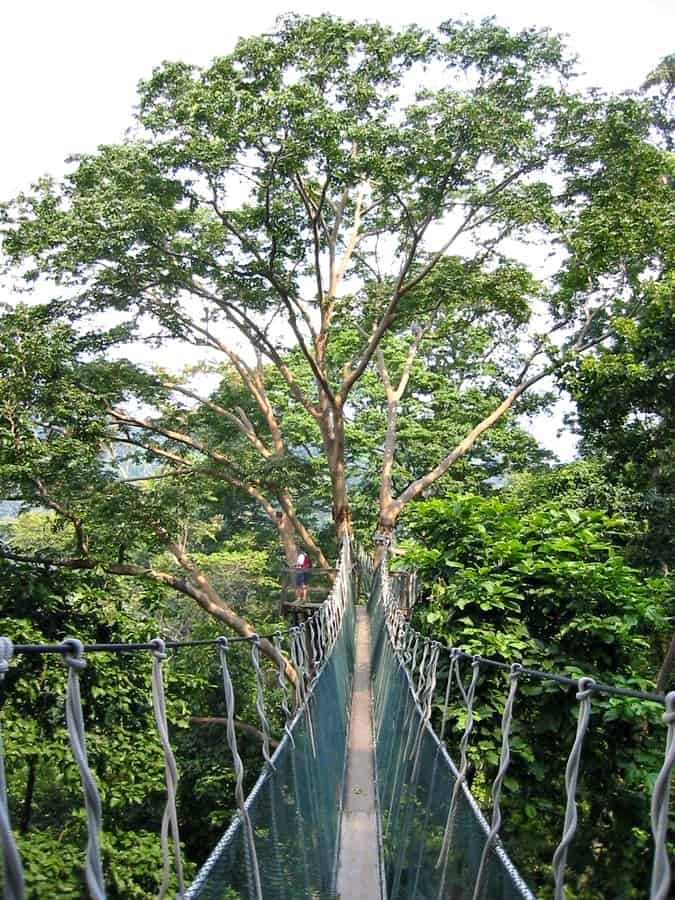 Things to do in Malaysia for Nature Lovers: FRIM Canopy Walk