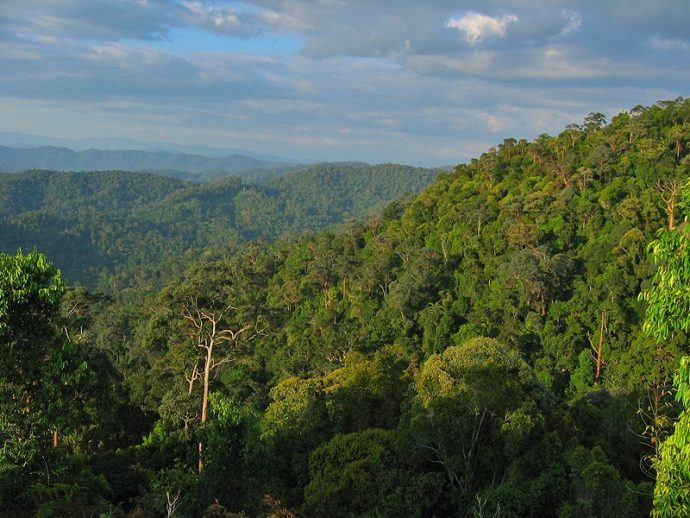 Things to do in Malaysia for Nature Lovers: Hike in Taman Negara