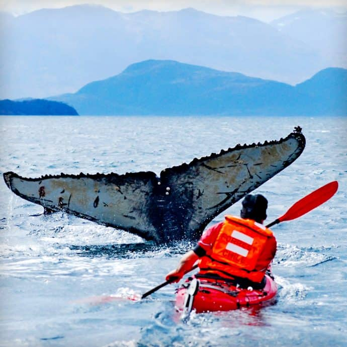 Things to do in Patagonia South America-Whale Watching