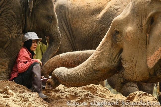 Lek Chailert, the Elephant Whisperer of Elephant Nature Park