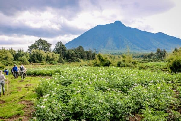 PIC OF THE WEEK: Trekking Rwanda's Parc National des Volcans